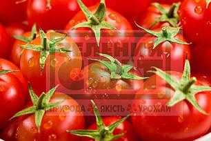 Семена томата Солероссо F1 (Nunhems) 1000 семян — ультра-ранний (90-95 дн), красный, детерминантный, круглый, фото 2