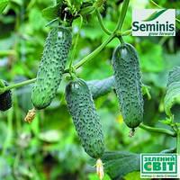 Семена огурца Мадита F1 (Seminis) 1000 семян - партенокарпик, ультра-ранний гибрид (40-45 дней)