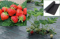 Агроволокно для полуниці