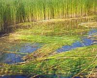 Скошування водної рослинності на річках
