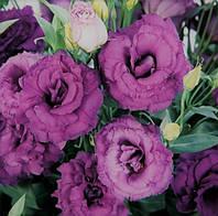 """Семена  цветов Эустомы """"ABC 3 F1"""", пурпурная, 50 гранул, """"Сабыба Центр"""", Украина"""