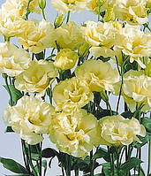"""Семена цветов Эустомы """"ABC 1 F1"""", желтая, 50 гранул, """"Сабыба Центр"""", Украина"""