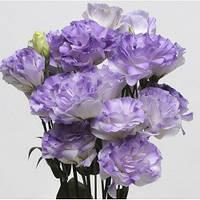 "Семена цветов Эустомы ""ABC 2 F1"", синий туман, 50 гранул, ""Садыба центр"",  Украина"