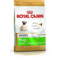 Роял Канин Мопс Юниор Royal Canin Pug junior сухой корм для щенков собак 500 г