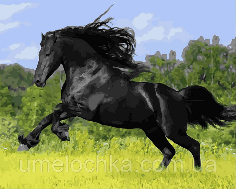 Раскраска по цифрам DIY Babylon Конь вороной (VP472) 40 х 50 см