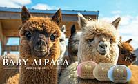 Уже на  сайте чудесная новинка:Gazzal BABY ALPACA