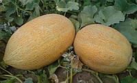 Семена дыни Фортуна, 500г