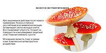 NeoBotox - крем омолаживающий с экстрактом Мухомора (НеоБотокс), фото 3