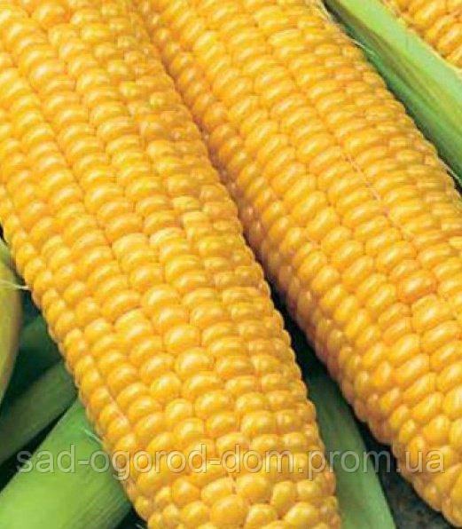 Кукуруза  сахарная Брусница, 500г
