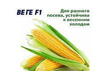 Кукуруза сахарная Веге-1 F1, 500г