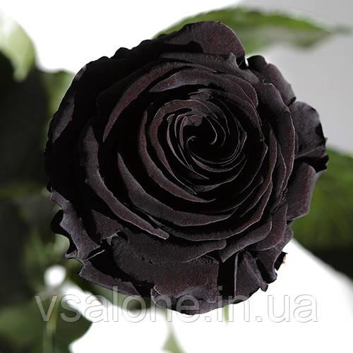 Долгосвежая роза FLORICH - ЧЕРНЫЙ БРИЛЛИАНТ (7 карат на среднем стебле)