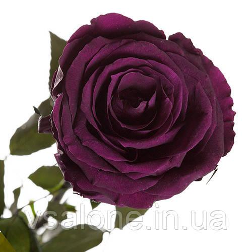 Долгосвежая троянда FLORICH - ФІОЛЕТОВИЙ АМЕТИСТ (7 карат на короткому стеблі)