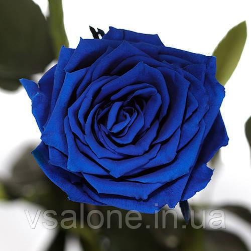 Долгосвежая роза FLORICH - СИНИЙ САПФИР (5 карат на коротком стебле)