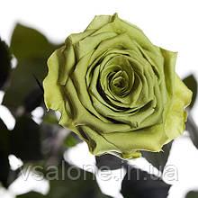 Долгосвежая роза FLORICH - ЛАЙМОВЫЙ НЕФРИТ (5 карат на коротком стебле)