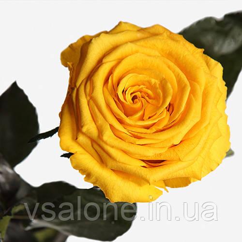 Долгосвежая роза FLORICH - СОЛНЕЧНЫЙ ЦИТРИН (5 карат на коротком стебле)