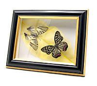 """Бабочки в рамке """"На листе"""" (20,5х16,5х3,5 см)"""