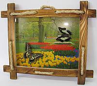 """Бабочки в рамке на фоне (2шт.)(28х23 см)(10"""")"""