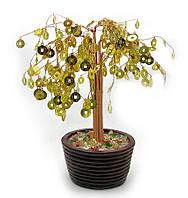 Дерево денежное в горшке  (24см)