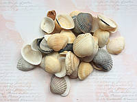 Ракушки морские натуральные 100гр, фото 1