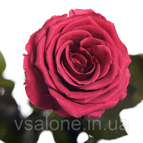 Долгосвежая троянда FLORICH - РОЖЕВИЙ КОРАЛ (7 карат на середньому стеблі)