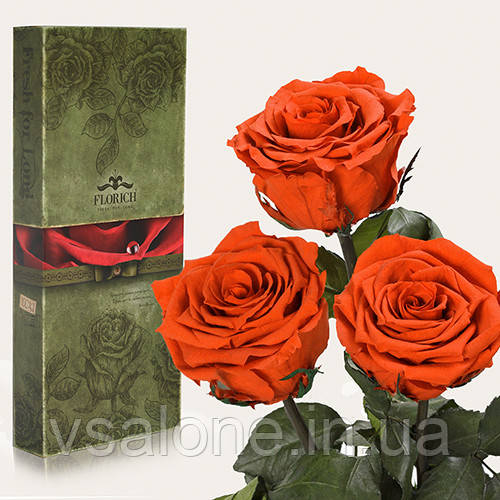 Долгосвежая роза FLORICH - Набор из 3шт ОГНЕННЫЙ ЯНТАРЬ (5 карат на коротком стебле)