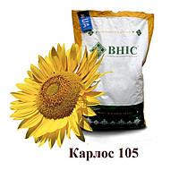 Семена подсолнуха  Карлос 105 под Евро-Лайтнинг/ Насіння  соняшника Карлос 105 (2018 р )