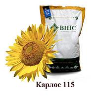 Семена подсолнуха Карлос 115 / Насіння  соняшника Карлос 115 (2018 р) під Євро-Лайтнінг /ВНІС/
