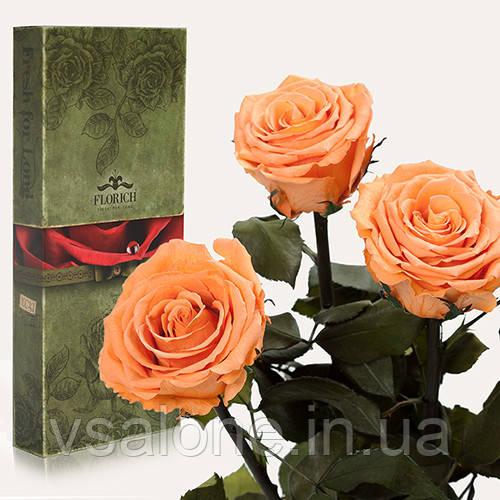 Долгосвежая троянда FLORICH - Набір з 3шт ЗОЛОТИСТИЙ ХРИЗОБЕРИЛ (7 карат на короткому стеблі)