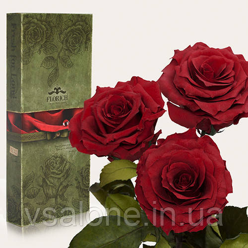 Долгосвежая роза FLORICH - Набор из 3шт БАГРОВЫЙ ГРАНАТ (7 карат на коротком стебле)