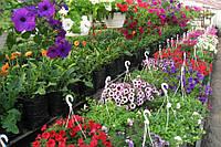 Большой выбор семян петунии, астры и прочих цветов  от разных производителей.
