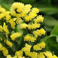 """Семена цветов Кермек (Статица) """"Крепость"""", желтый, однолетнее, 0,5 г  """"Садиба Центр"""", Украина."""