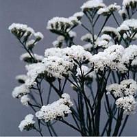 """Семена цветов Кермек (Статица) """"Айсберг"""", белый, 3 г, """"Садиба центр"""", Украина"""