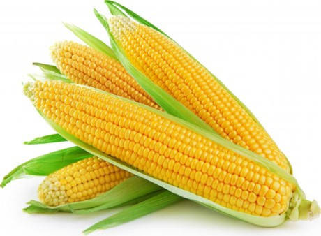 Семена кукурузы Моника (Моніка), ФАО 350, 25 кг в мешке, фото 2