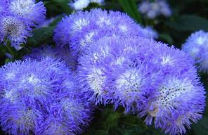 "Семена цветов Агератум ""Даймонд F1"", голубой, однолетнее, 10 гранул, ""Садыба Центр "",  Украина"