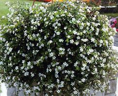 "Семена цветов Бакопа ""Сноутопия"", однолетнее, 20 гранул, ""Садиба Центр"",  Украина"
