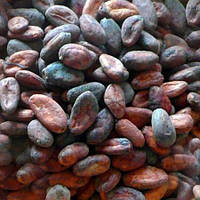Какао-бобы сырые