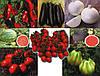 Семена овощных культур ISI Sementi
