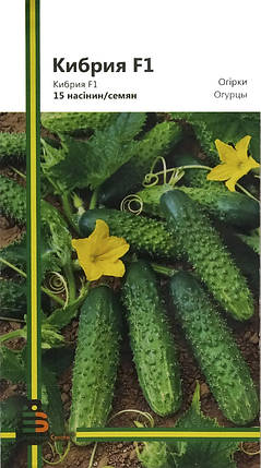 Семена огурцов Кибрия F1 15 шт, Империя семян, фото 2