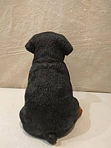 Статуэтка (копилка) собака щенок ротвеллера цветной, фото 3