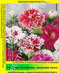 Семена Гвоздика «Китайская Махровая» смесь 50 г