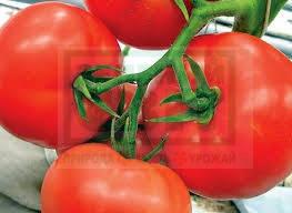 Семена томата Мобил/Lark seeds, 250 г — известный и проверенный сорт для свежего рынка, фото 2