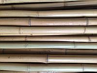 Бамбуковый ствол, д.3-4см, L 4м, декоративный, Уценка