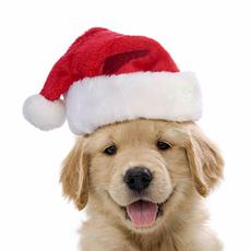 Шапки Санта Клауса