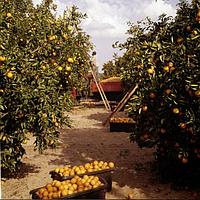 На сезон 2018 приглашаем рабочих на сбор фруктов в Испанию