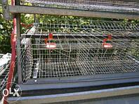 Клетка для кур-несушек на 20 кур, клетка для кур, клетки для птиц
