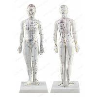 Муляж тела человек 48 см женщина, фото 1