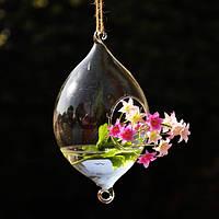 Висит оливкового форма стеклянная ваза гидропонных установках сад цветочный горшок