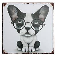 Собака олова, войдите старинные металлические бляшки декор плакат паб в стены дома