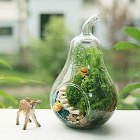 Грушевидной формы цветок стекло ваза мох микро-ландшафтный ЭКО-бутылка
