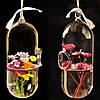 Гидропоника растений форма цветка таблетки висит стеклянной вазе домашнего декора